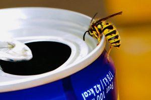 drinkende wesp