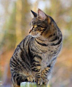 Katten uit de tuin verjagen 9