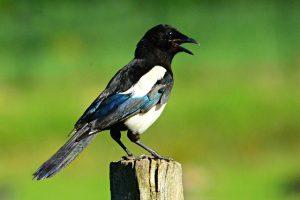 Vogels verjagen uit de tuin 9