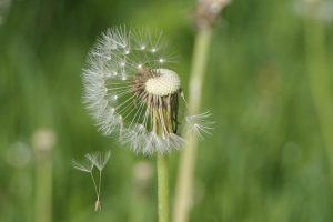 Onkruiden herkennen, welke soorten zijn er? 25